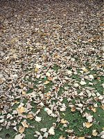 So many crunchy autumn leaves