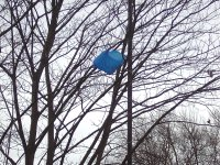 A bag in a tree.