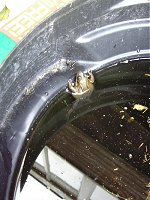 A frog in a dustbin. It is disgusting.